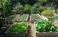A Suburban Garden to Feed the Whole Family