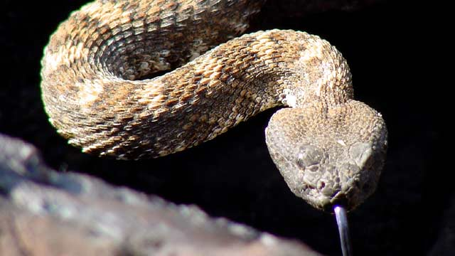 The Snakes Are Out in Middle TN, Here's What You Should Know