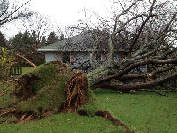 Don't Get Scammed by Risky Tree Removal Offers