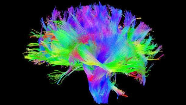 What Music Does to Your Brain