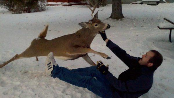 Meet America's Most Dangerous Animal